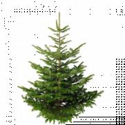 sapin-naturel-epicea-1er-choix-150-175-1481581