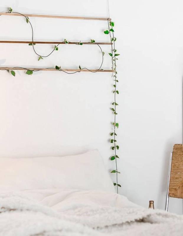 Une-plante-en-guise-de-tete-de-lit